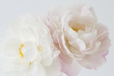 Irisia Harmony by Irene Suchocki