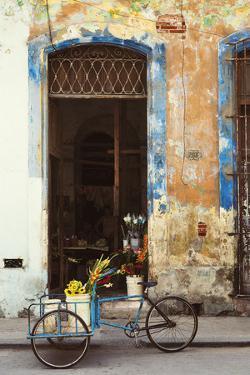 La Bici by Irene Suchocki