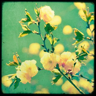 Magnolia Mist by Irene Suchocki