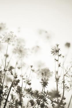 Meadow Haze - Neutral by Irene Suchocki