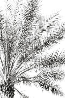 Palm Breeze Noir by Irene Suchocki