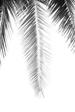 Palm Revive Noir by Irene Suchocki