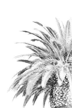 Palm Spring - Noir by Irene Suchocki