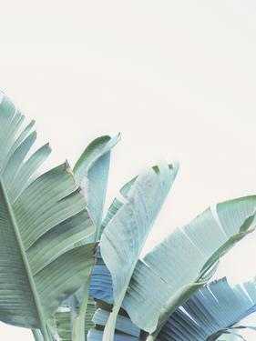 Palmetto Bay - Detail II by Irene Suchocki