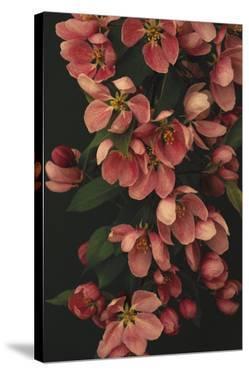 Passionate Petals by Irene Suchocki