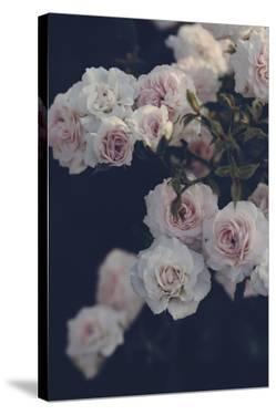Rambling Roses by Irene Suchocki