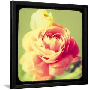 Rose Mist by Irene Suchocki