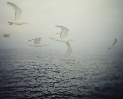 Summer Migration by Irene Suchocki