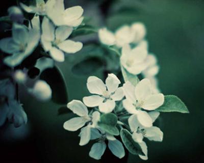 The Midnight Garden II by Irene Suchocki