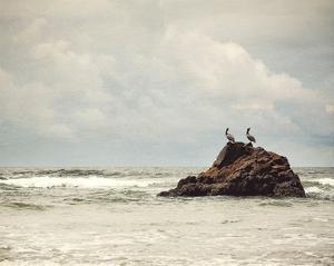 The Pelican Brief by Irene Suchocki