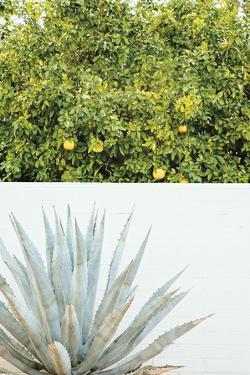 Urban Cactus by Irene Suchocki