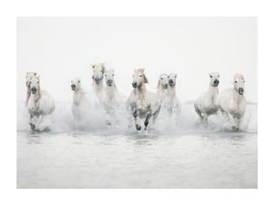 White Horses I by Irene Suchocki