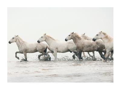 White Horses II by Irene Suchocki