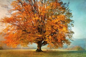 Autumn's Passion by Irene Weisz