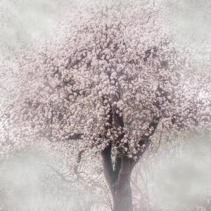 Blossoms of Spring III by Irene Weisz