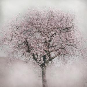 Blossoms of Spring IV by Irene Weisz