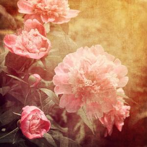 Art Floral Vintage Background with Pink Peonies by Irina QQQ
