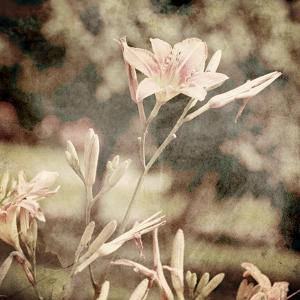 Art Floral Vintage Sepia Background with Light Pink Lilies by Irina QQQ