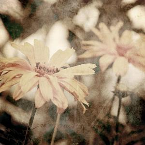 Art Floral Vintage Sepia Background with Light Yellow Chamomiles by Irina QQQ