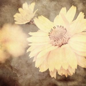 Art Floral Vintage Sepia Background with One Light Yellow Chamomile by Irina QQQ