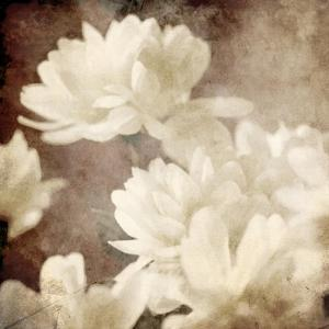 Art Floral Vintage Sepia Background with White Asters by Irina QQQ
