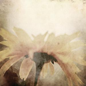 Art Floral Vintage Sepia Blurred Background with One Light Yellow Chamomile by Irina QQQ
