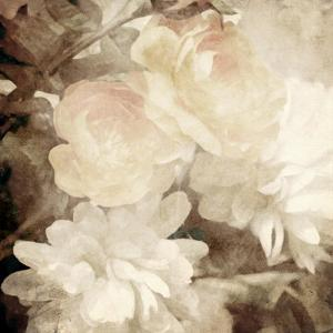Art Floral Vintage Sepia Blurred Background with White Asters and Roses by Irina QQQ