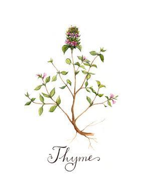 Thyme by Irina Trzaskos Studio