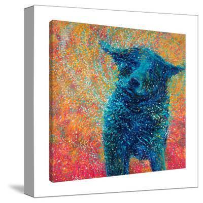 Big Dog Shake by Iris Scott