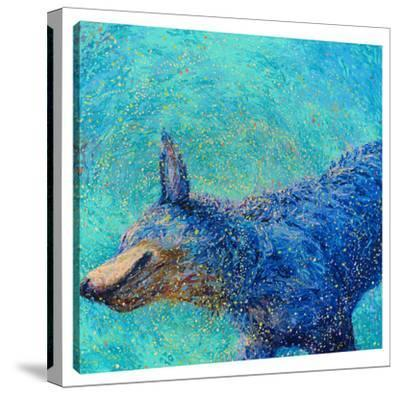 Shaking Blue Heeler by Iris Scott