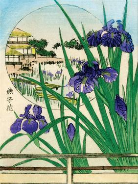 Irises Round Painting