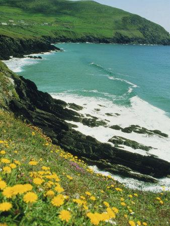 https://imgc.allpostersimages.com/img/posters/irish-summer-colours-dingle-peninsula-county-kerry-munster-republic-of-ireland-eire_u-L-P1TQEQ0.jpg?p=0