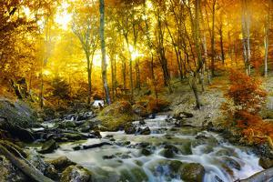 Autumn Creek Woods with Yellow Trees Foliage and Rocks in Forest Mountain. by Irochka
