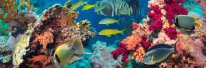 Colorful Underwater Reef with Coral and Sponges by Irochka