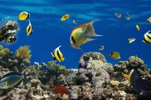 Coral and Fish in the Red Sea.Egypt by Irochka
