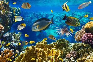 Photo of a Tropical Fish on a Coral Reef by Irochka