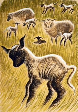 Ewes and Lambs, 1953 by Isabel Alexander