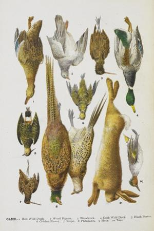 Assorted Game Including Rabbit, Duck, Snipe, Pigeon and Pheasants by Isabella Beeton