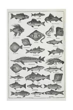 Fish by Isabella Beeton