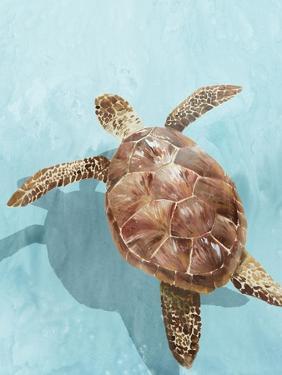 Ocean Deep Turtle II by Isabelle Z