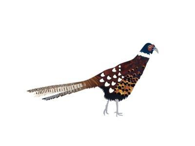 Pheasant, 2013 by Isobel Barber