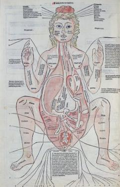 The Anatomy of the Pregnant Woman, Illustration from 'Fasciculus Medicinae' by Johannes De Ketham by Italian School