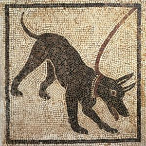 Italy, Campania, Pompeii, Mosaic Work Depicting a Dog