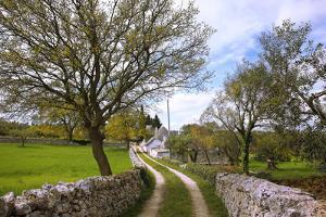 Italy: Puglia: landscape in the valley of Itria in spring