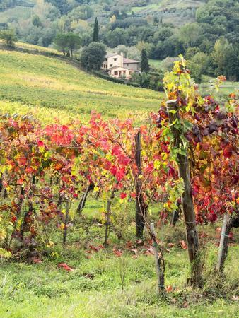https://imgc.allpostersimages.com/img/posters/italy-tuscany-farm-house-and-vineyard-in-the-chianti-region_u-L-PXRNAF0.jpg?artPerspective=n
