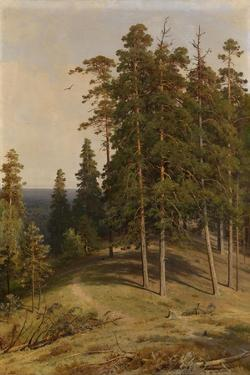 The Pine Forest, 1895 by Ivan Ivanovich Shishkin