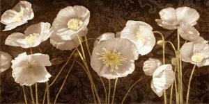 Baroque Poppies by Ives Mccoll