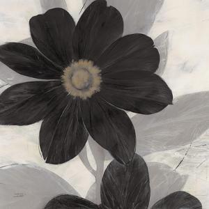 Midnight Bloom by Ivo (Lipman)