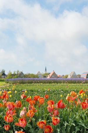 Small Village Den Hoorn with White Church at Dutch Wadden Island Texel