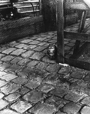 Dans la Cours, 255 Avenue Alesia, c.1947 by Izis